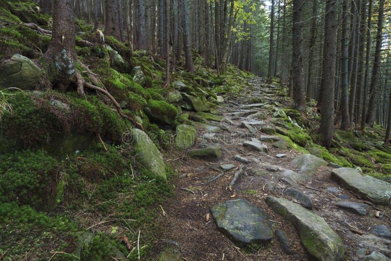 Floresta bonita misteriosa com pedras musgosos imagens de stock royalty free