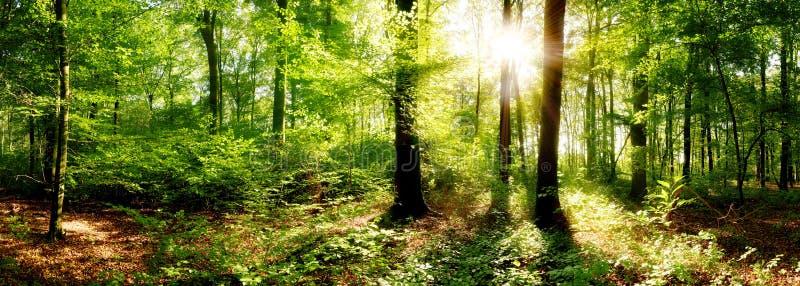 Floresta bonita na luz do sol brilhante foto de stock