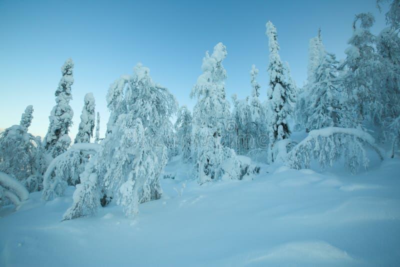 Floresta bonita na neve fotografia de stock