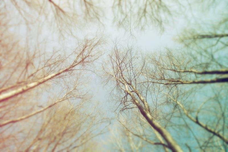 Floresta borrada como o fundo abstrato da natureza fotos de stock