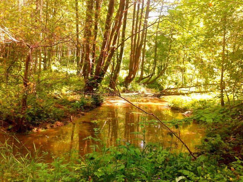 Floresta brilhante foto de stock royalty free