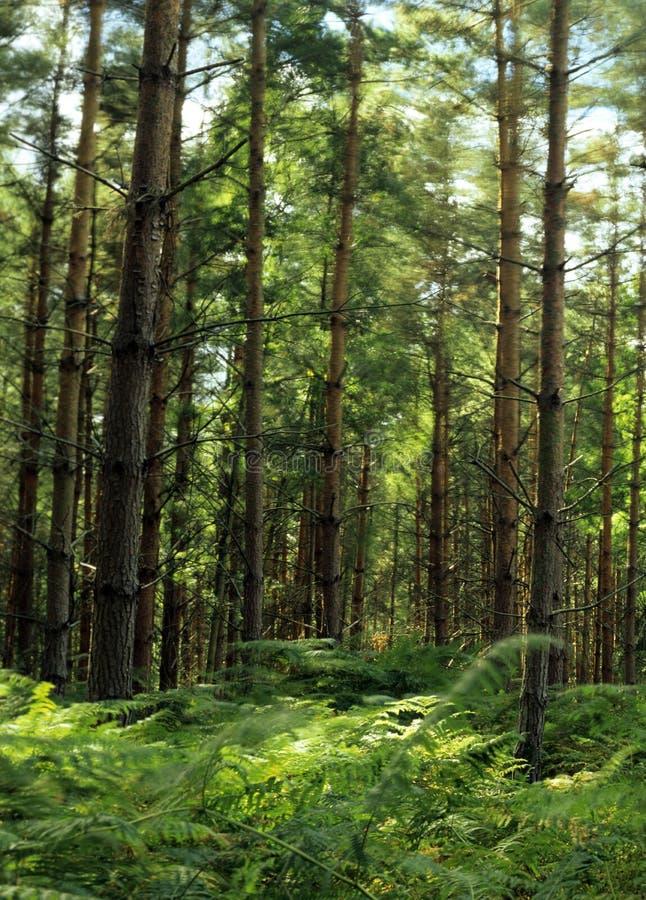 Floresta cénico foto de stock