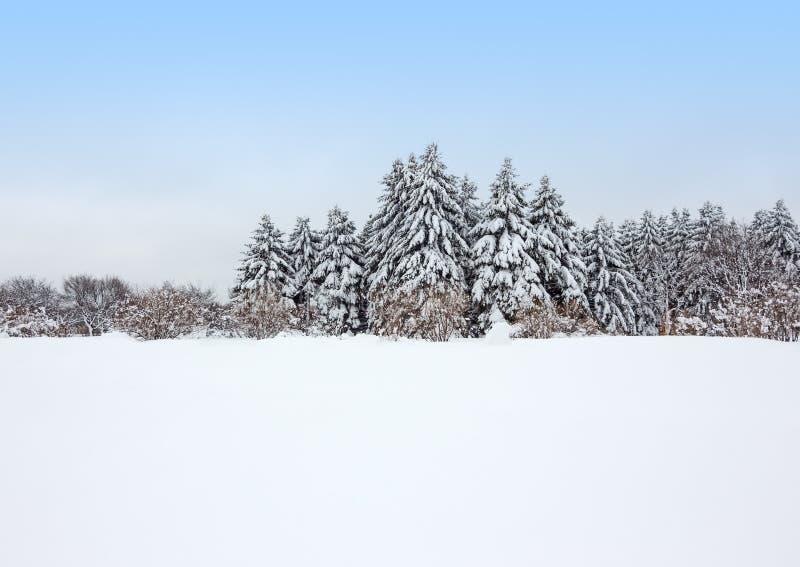 Floresta calma do inverno após a tempestade de neve imagens de stock