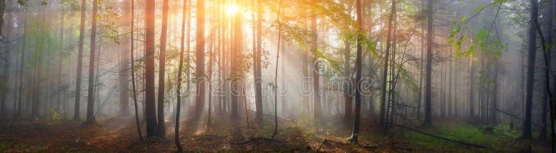 Floresta Carpathian mágica no alvorecer foto de stock
