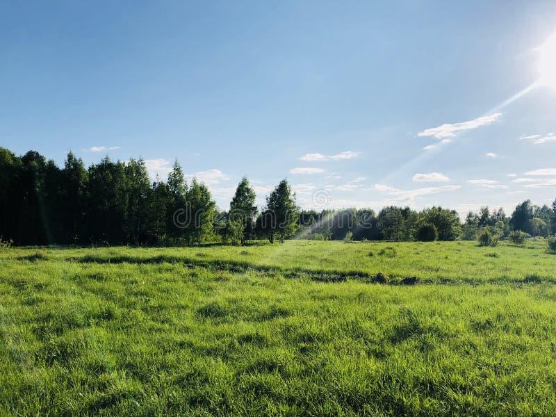 Floresta, clareira, sol, verão, céu azul, grama verde fotografia de stock
