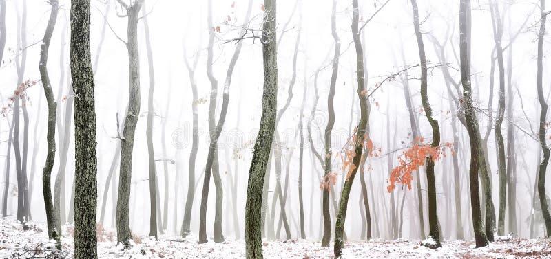 Floresta coberta com o gelo do esmalte imagem de stock royalty free