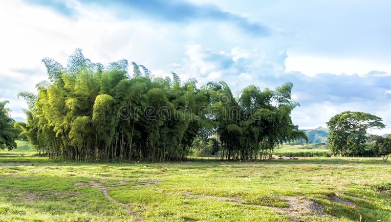 Floresta colombiana bonita foto de stock royalty free