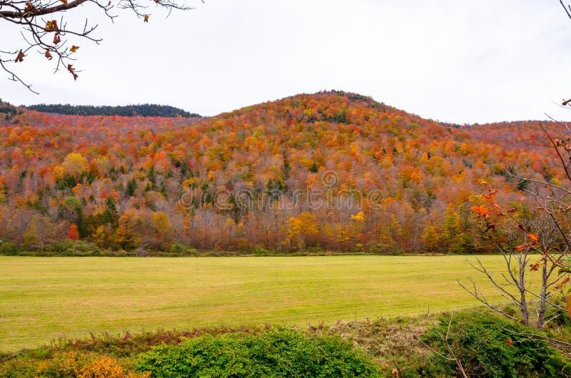 Floresta colorida da árvore de bordo de Hillses imagens de stock