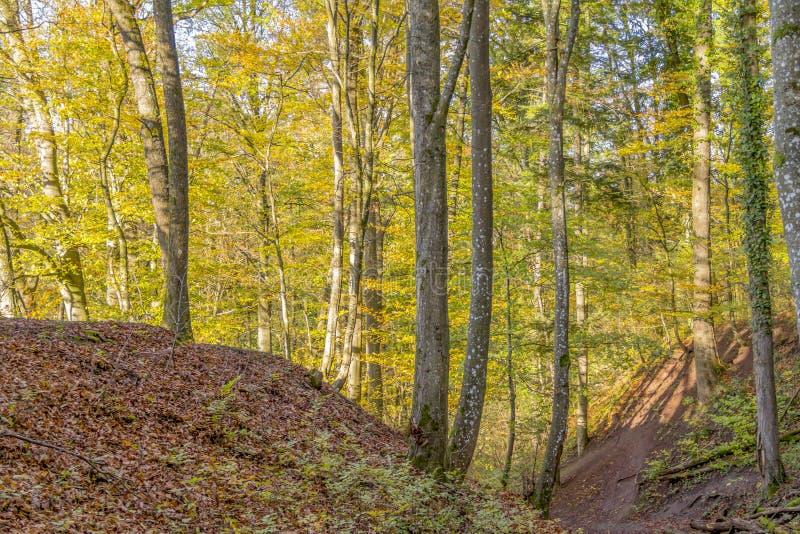 Floresta colorida do outono fotografia de stock royalty free