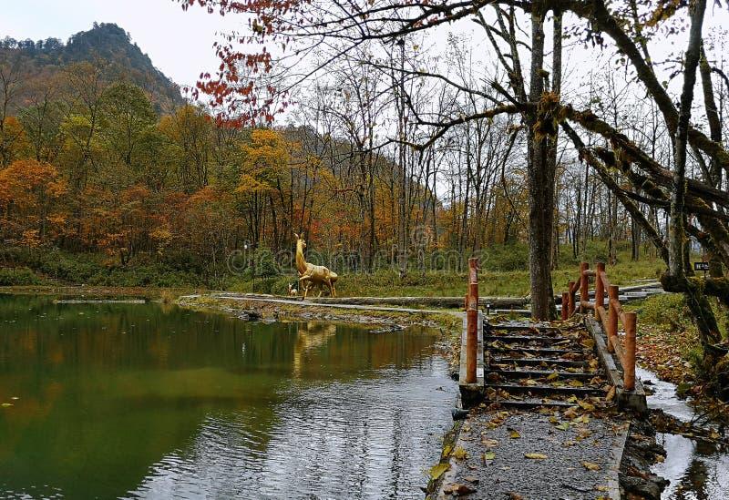 Floresta colorida do outono da montanha de Erlangshan, em Yana, Sichuan fotos de stock