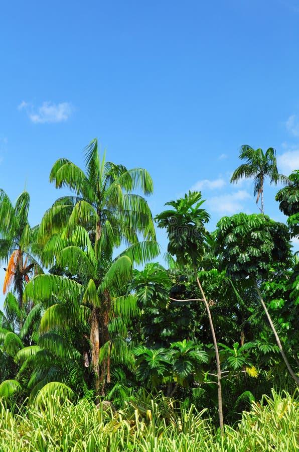 Floresta com árvore de coco foto de stock royalty free