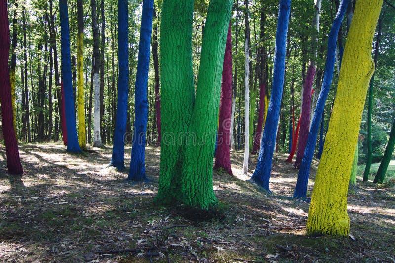Floresta com árvores pintadas fotografia de stock
