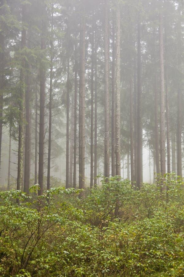 Floresta com névoa da manhã imagens de stock royalty free