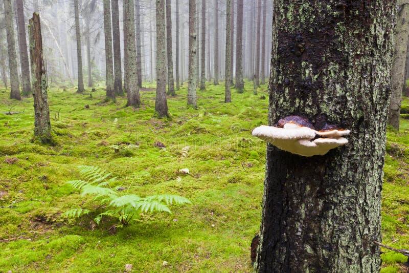 Floresta com névoa da manhã fotografia de stock