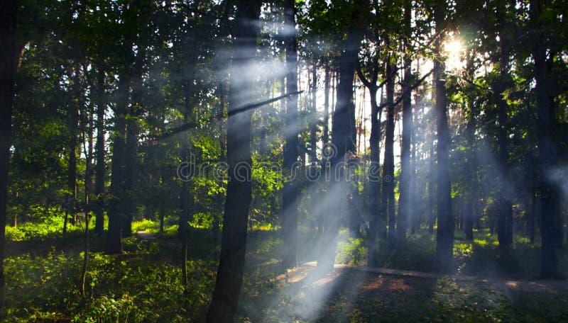floresta com névoa e luz morna imagem de stock