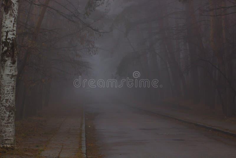floresta com névoa e luz morna fotos de stock