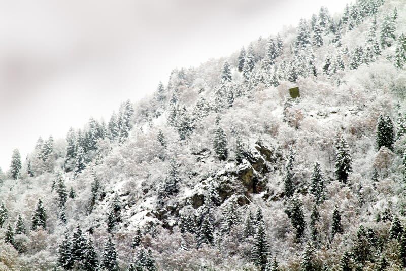 Floresta com neve imagem de stock royalty free