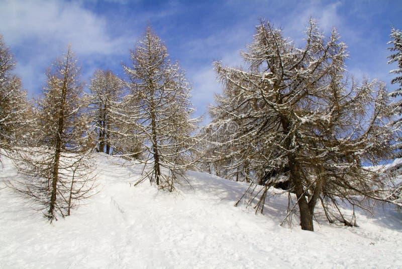Floresta com neve foto de stock royalty free