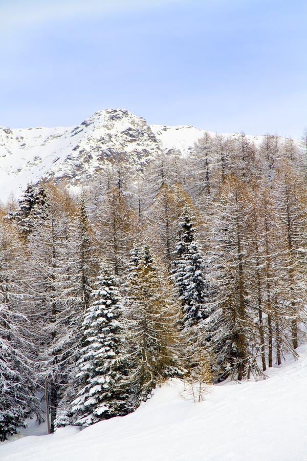 Floresta com neve imagens de stock royalty free