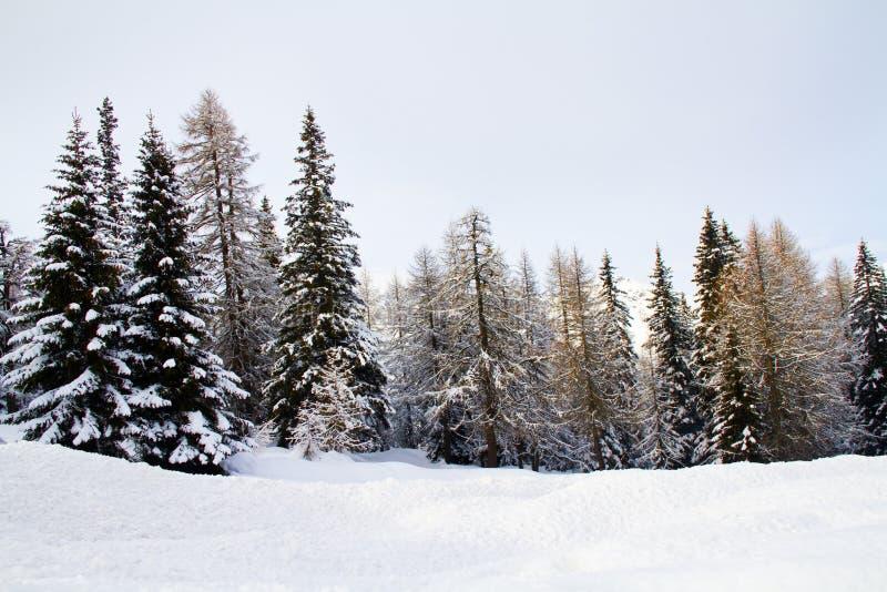 Floresta com neve imagem de stock