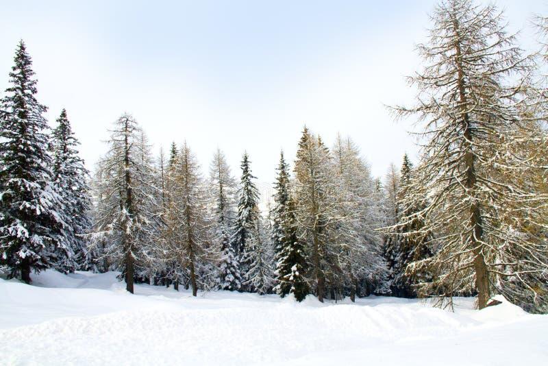 Floresta com neve fotos de stock