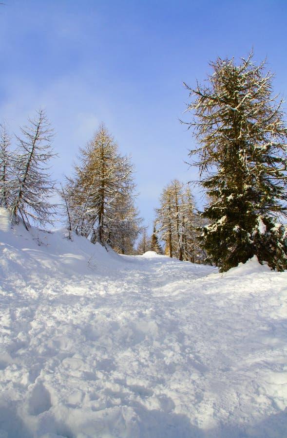 Floresta com neve fotografia de stock royalty free