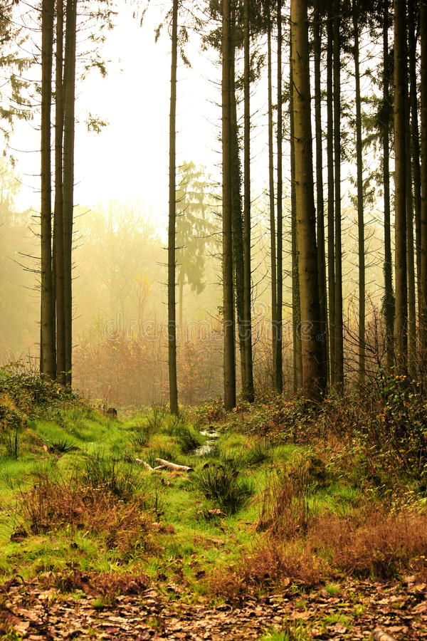Floresta com pequenas quantidades de névoa fotos de stock