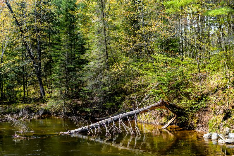 Floresta com Pond e Árvore Morta foto de stock