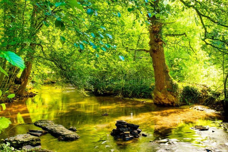 Floresta com ribeiro fotos de stock