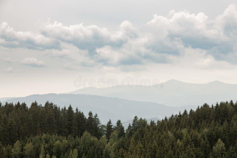 Floresta conífera bonita - abetos, larício Olhar do vintage Montanhas de Styria, Áustria fotos de stock