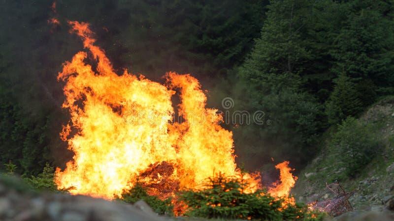 Floresta conífera no fogo fotografia de stock royalty free