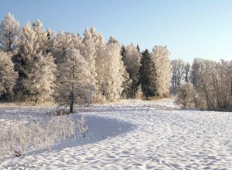 Floresta congelada imagem de stock