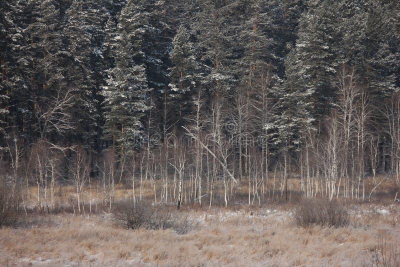 Floresta congelada fotografia de stock