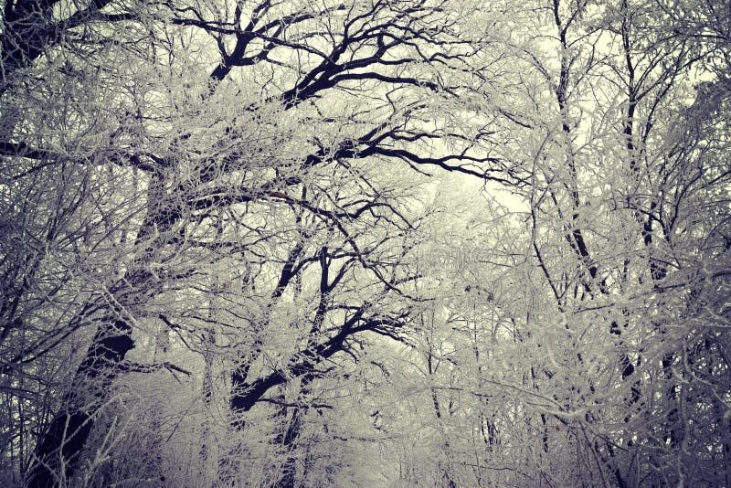 Floresta congelada fotos de stock royalty free