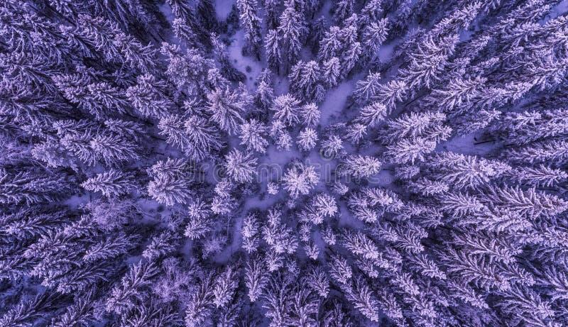 Floresta congelada de cima de imagem de stock