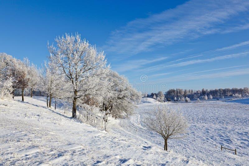 Floresta da árvore Deciduous com geada fotografia de stock royalty free