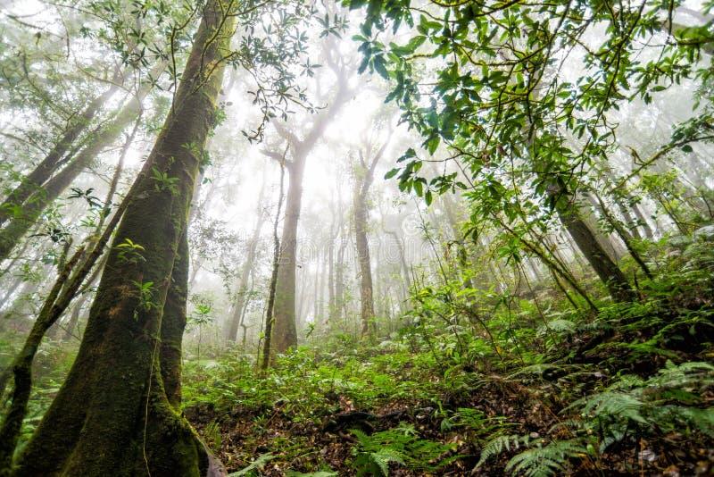 Floresta da árvore na estação do outono de Tailândia fotografia de stock royalty free