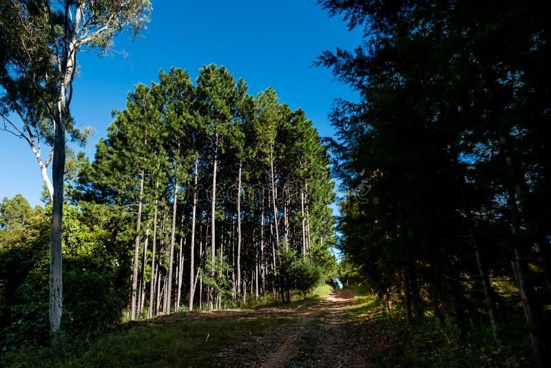 Floresta da árvore da samambaia vista do trajeto rochoso imagens de stock