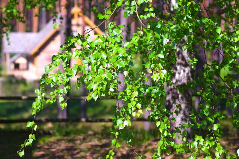Floresta da casa na primavera imagem de stock