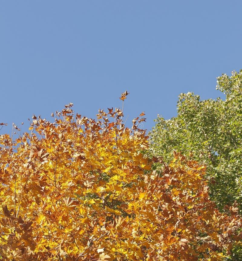 Floresta da cor do outono em Smolensk Rússia fotos de stock royalty free