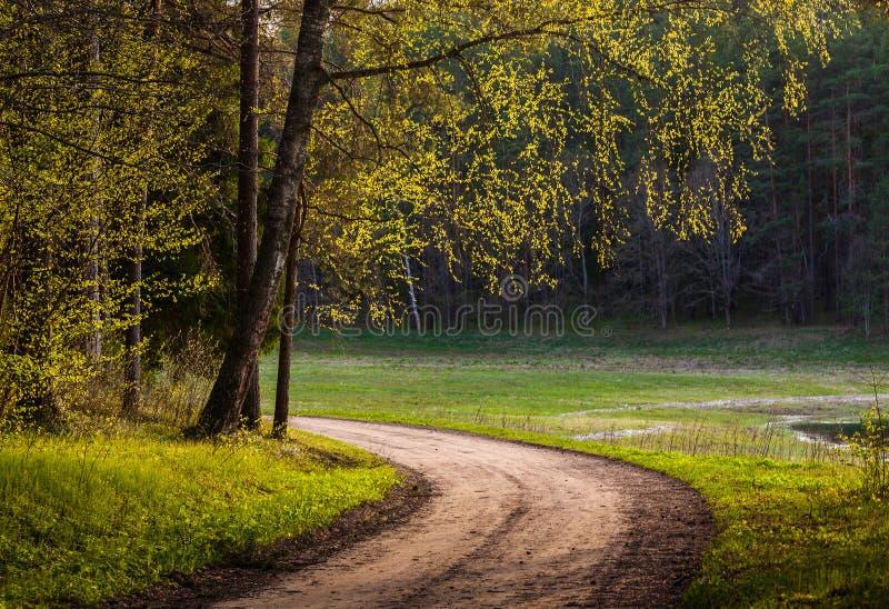 A floresta da estrada na primavera imagem de stock
