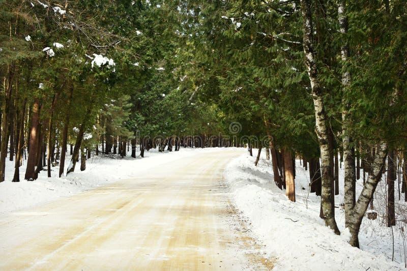 Floresta da estrada nevado foto de stock royalty free
