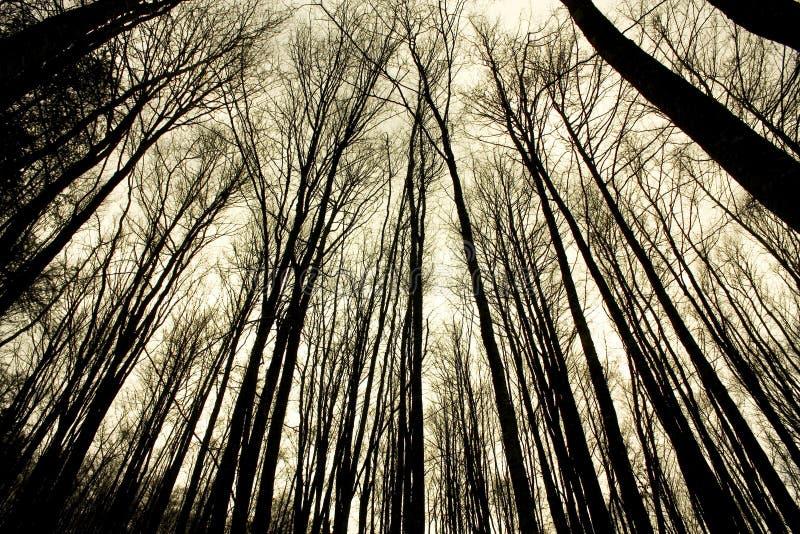 Floresta da faia na selva de Irati. Navarra fotografia de stock