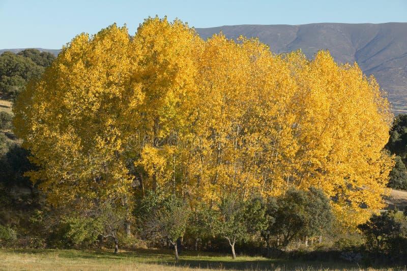 Floresta da faia no outono com tom morno spain foto de stock