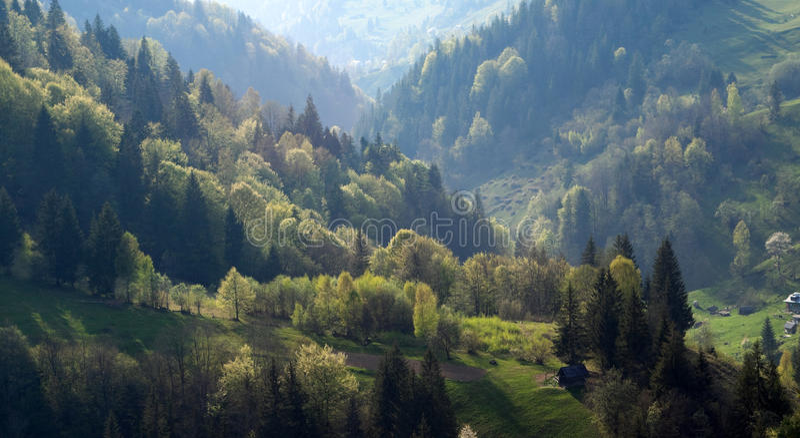 Floresta da fantasia imagens de stock