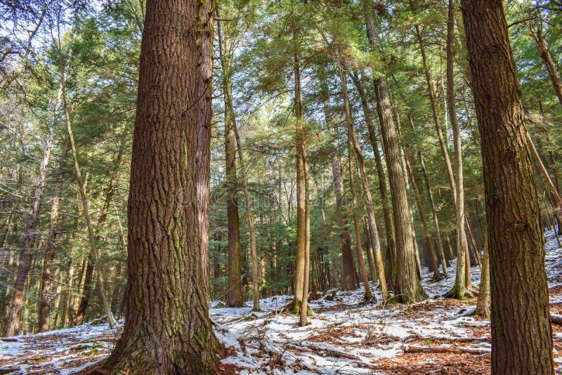 Floresta da floresta primária fotografia de stock