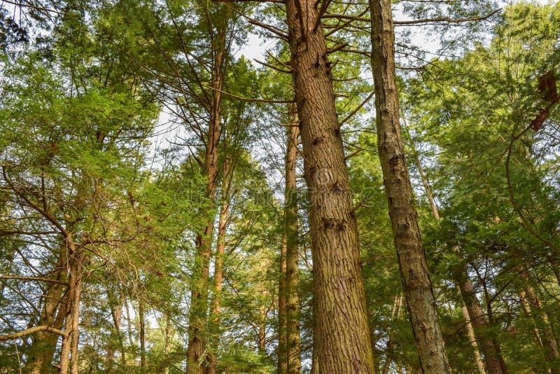 Floresta da floresta primária imagem de stock