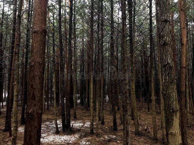 Floresta da madeira leve fotos de stock