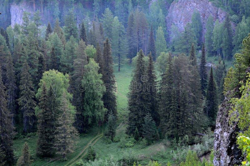 Floresta da manhã da parte superior do penhasco ao dymkoj do esclarecimento da estrada foto de stock royalty free