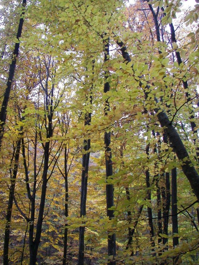 Floresta da mola na manhã nas montanhas crimeanas fotografia de stock royalty free